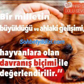 Hayvan severlik